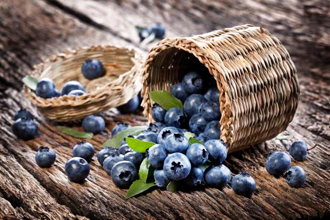 blueberries-for-juicing